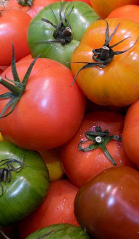 Tomates img